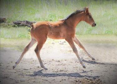 Horses Under 3